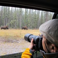 buffalo viewing tour, north star adventures