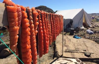 Arctic Ocean Cultural Experience, North Star Adventures