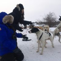 dogsled tour, north star adventures