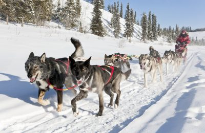 North Star Adventures dogsled tour